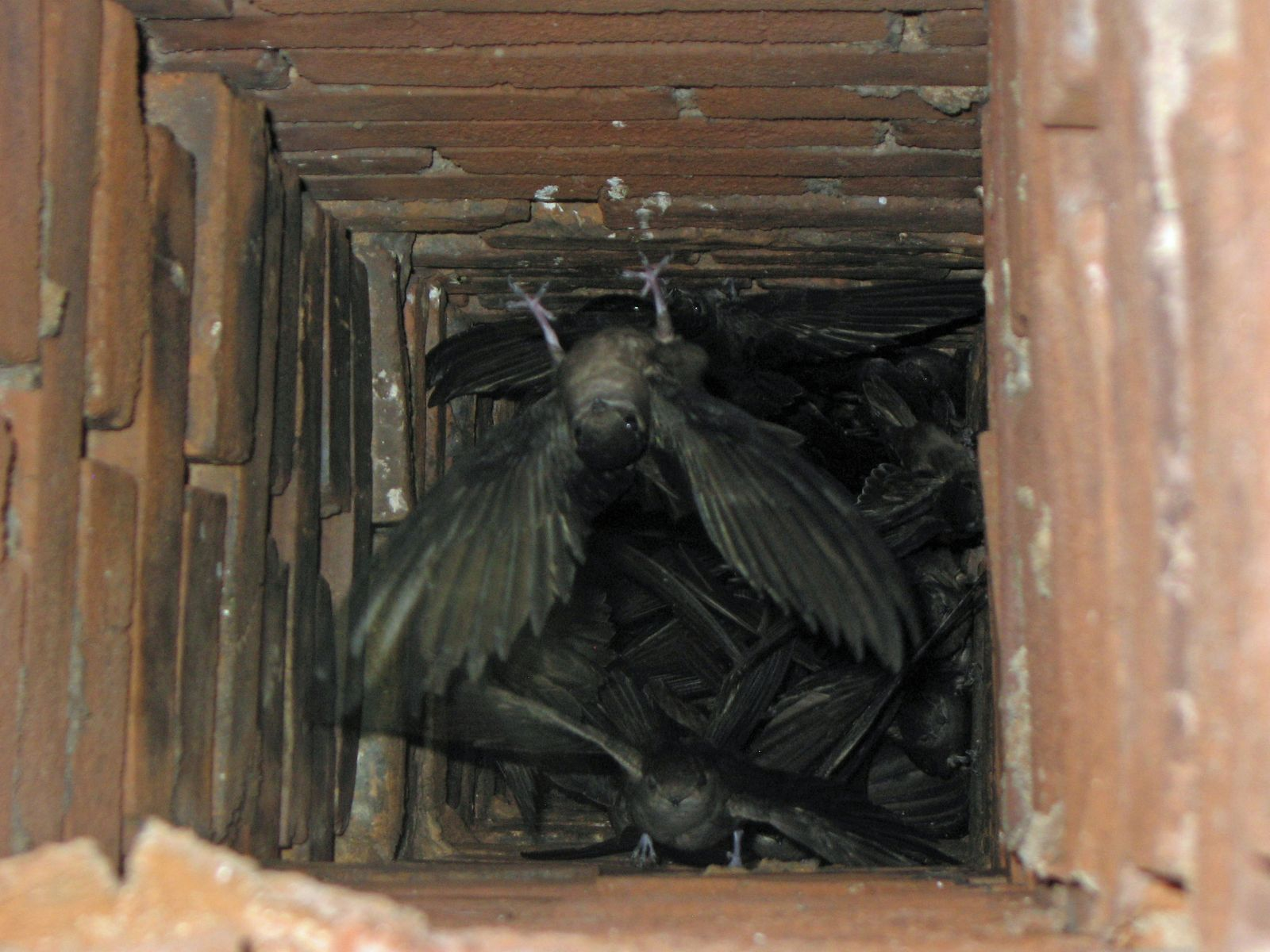 bird in chimney